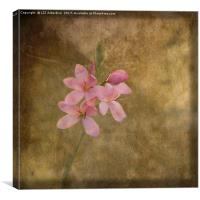 An Unexpected Bloom, Canvas Print