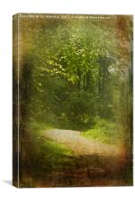 Woodland Path at Haddo, Canvas Print