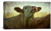 Moo In the Morning, Canvas Print
