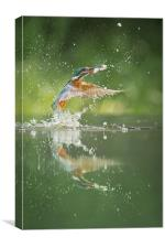 Kingfisher with catch., Canvas Print