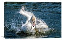 Swan Ballet, Canvas Print