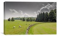 Field Of Sheep, Canvas Print