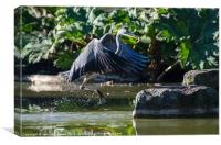 A Heron Fishing, Canvas Print