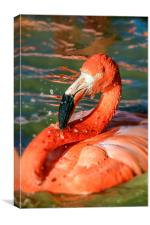 Orange Flamengo Flamingo, Canvas Print