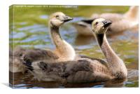 Goose Chicks Striking A Pose, Canvas Print