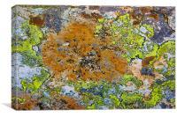 Lichen, Canvas Print