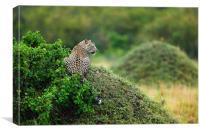 Leopard, Canvas Print