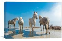 Camargue Horses, Canvas Print