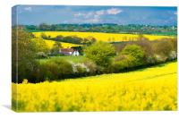 Rapeseed Fields, Canvas Print