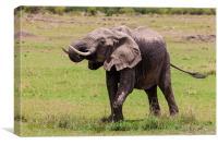 African Elephant, Canvas Print