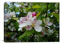 Spring Apple Blossom, Canvas Print
