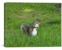 squirrel on watch, Canvas Print