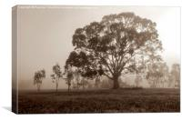 Gum Tree in the Mist at Yan Yean Park, (Sepia), Canvas Print