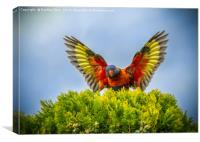 Rainbow Lorikeet in Flight, Canvas Print