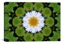 Kaleidascope Daisy, Canvas Print