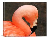 Pretty Flamingo, Canvas Print