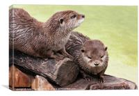 Happy Otters, Canvas Print