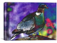 Funky Wood Pigeon, Canvas Print