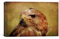 Common Buzzard, Canvas Print