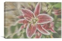 Pictures Of Lily, Canvas Print