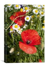 Poppies In The Camomile, Canvas Print