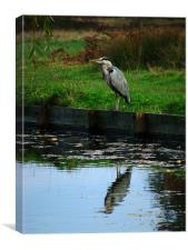 Heron Reflected, Canvas Print