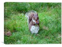 Squirrel Snack, Canvas Print