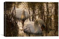 Swans at Sundown, Canvas Print