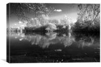 White Trees At Leybourne, Canvas Print
