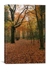 Walk In The Woods In Autumn, Canvas Print