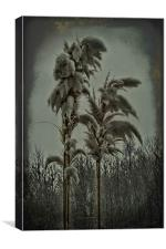 Pampas In The Snow, Canvas Print
