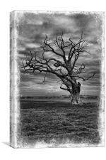 Mundon Oak, Canvas Print