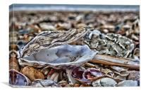 Shells On The Beach, Canvas Print
