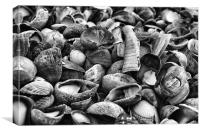 Shell Selection, Canvas Print
