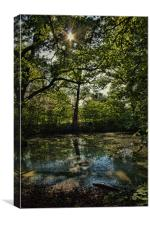 Light On The Pond, Canvas Print