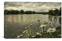 Lakeside Daisys, Canvas Print