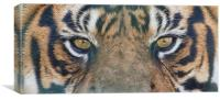 Tigers Eyes, Canvas Print