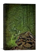 Clouded Leopard, Canvas Print