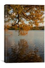 Oak On The Lake, Canvas Print