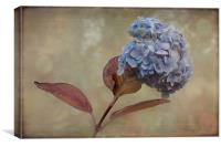 Hydrangea, Canvas Print