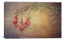 Fuschia, Canvas Print