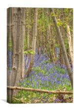 Bluebells In The Coppice, Canvas Print