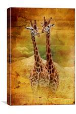 Giraffes, Canvas Print
