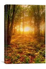 Winter Sun In The Woods, Canvas Print