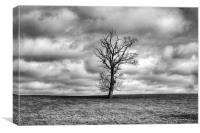 Single Tree, Canvas Print