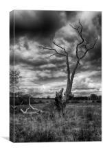 Broken Tree, Canvas Print