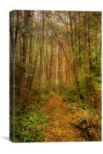 Woodland Path In Autumn, Canvas Print