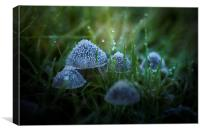 Frozen Fungi, Canvas Print