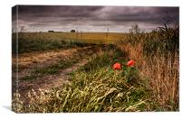 Poppies At Northbourne, Canvas Print