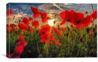 Poppies at Dusk, Canvas Print